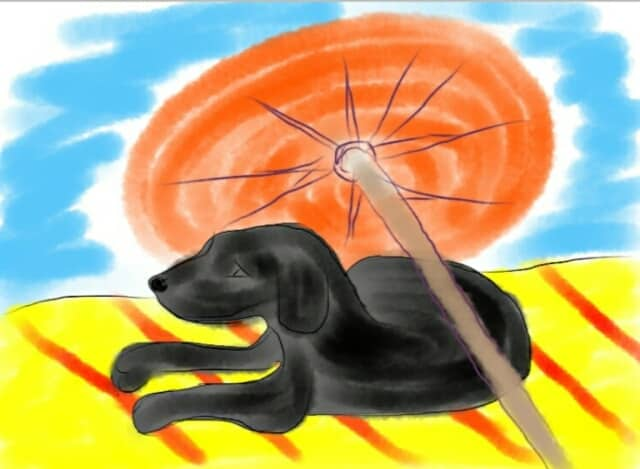 Koira matolla